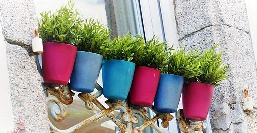 Hermaion CROP Blues, purple pots w green plants Pixabay