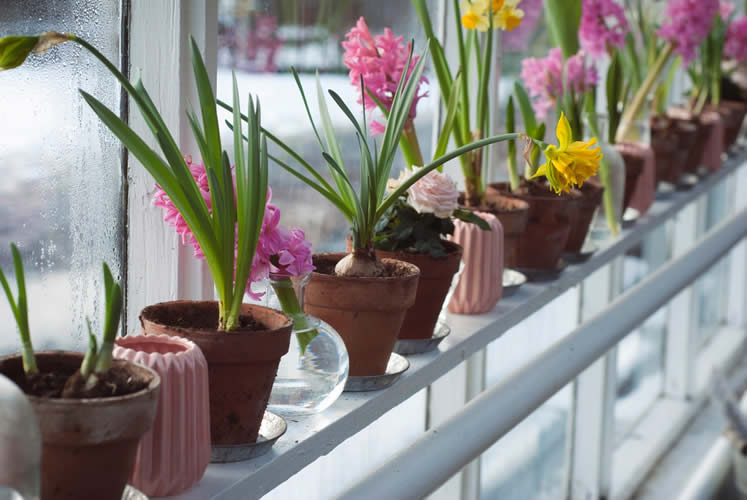 Gemma Evans Colorful plants in pots on fence