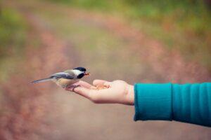 bird perches on open hand